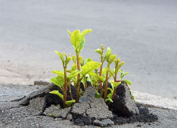 Flowers-growing-out-of-the-concrete-photography23